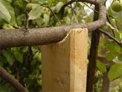 Подпорки под яблони