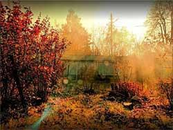 Уход осенью за плодовым садом