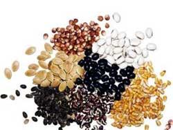 Подготовка семян овощных культур к посеву