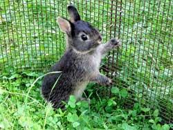 Кормление и уход за декоративными кроликами