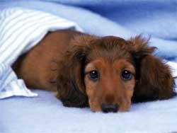 Почему домашние животные хандрят