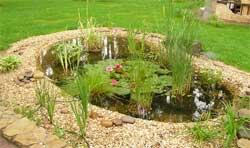 Легкий в уходе пруд для маленького сада