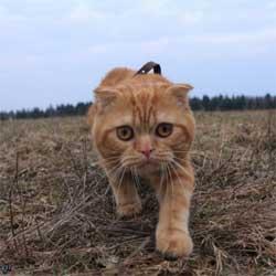 За жизнь кошачью
