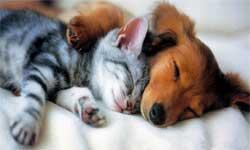 Собака и кошка: развеивание мифов