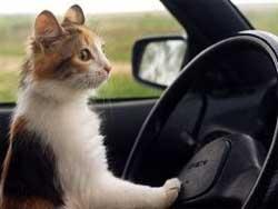 Как правильно перевозить домашних животных: 3 важных правила