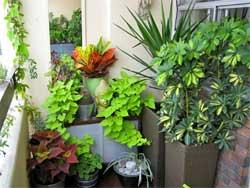Как устроить летний сад на балконе