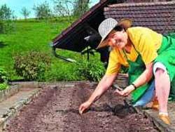 Десять самых лучших овощей для посадки в начале мая