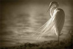 """Птицы вымершие и """"воскресшие"""""""