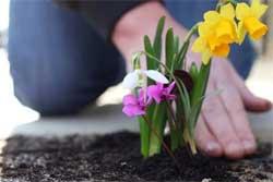 Сажаем цветы в июне