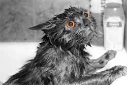 Основные сигналы, которые помогут понять желания кошки