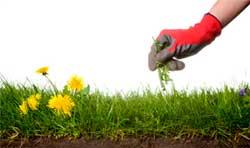 Как спастись от сорняков