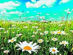 Почему лучше собирать лекарственные травы в июле