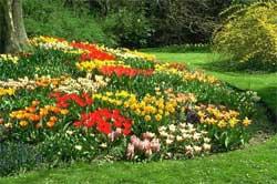 Как организовать постоянно цветущие посадки