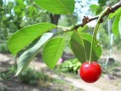 Три главных вида растений, которые нужно защитить от вредителей в июле