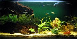 Аэрация воды в аквариуме. Отсадники и нерестилища. Сачок.
