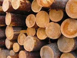 Как определять древесные породы
