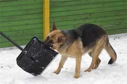 Как сделать, чтобы мокрый снег не прилипал к лопате