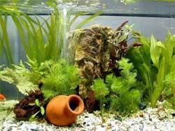 Самодельные аквариумы