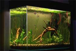 Самодельный аквариум