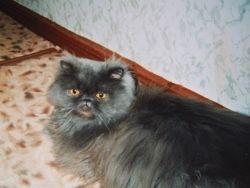 В Кургане суд выселил кота из коммунальной квартиры