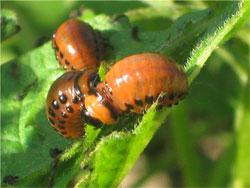 Защита растений в разгар сезона