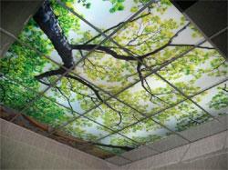 Самый крепкий потолок - стеклянный